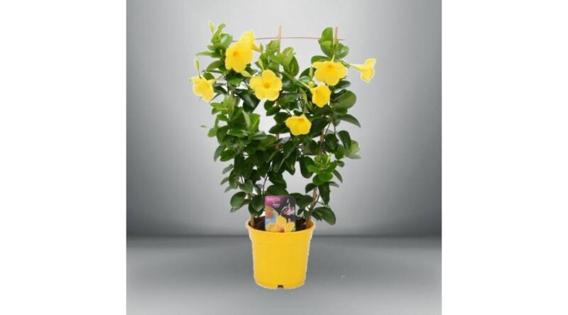különleges virágok