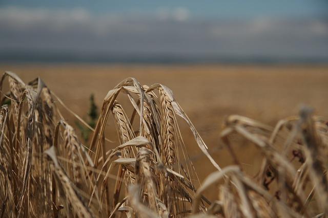 Agrárhitel vállalkozásoknak